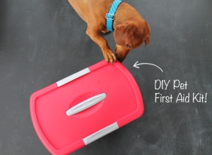 Photo Credit: http://www.ammothedachshund.com/2012/11/20/diy-pet-first-aid-kit/?fb_source=pubv1